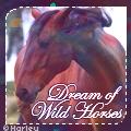 dream of wild horses